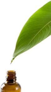 aromatherapy-leaf
